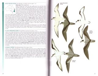 The field guide to the birds of Australia.