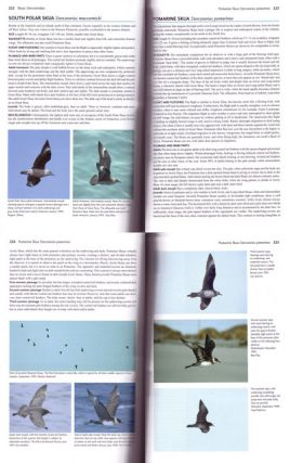 Flight identification of European seabirds.