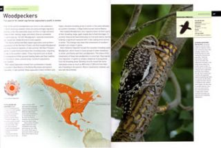 The atlas of bird migration: tracing the great journeys of the world's birds.