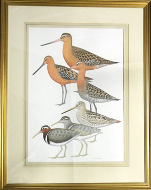 Godwit and Snipe. Jeff Davies.