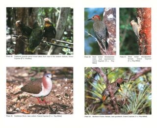 Birds of the Cayman Islands.