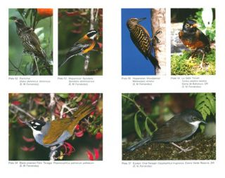 The birds of Hispaniola: Haiti and the Dominican Republic.