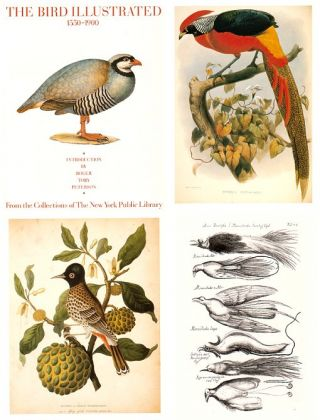 The bird illustrated 1550-1900. Joseph Kastner