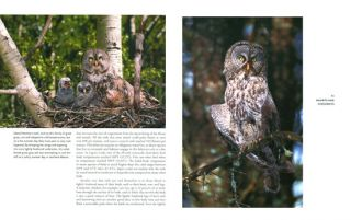 Owls of the United States and Canada: a complete guide to their biology and behavior.