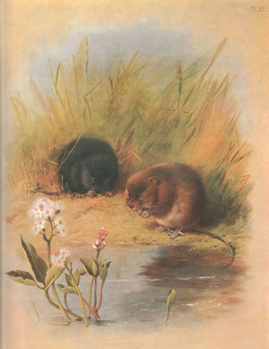 The complete illustrated Thorburn's mammals.