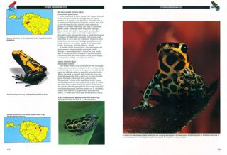 Jewels of the rainforest: poison frogs of the family Dendrobatidae.