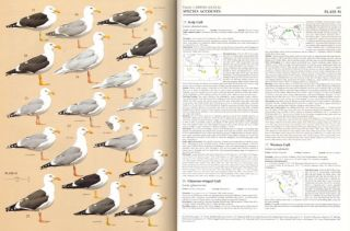 Handbook of the birds of the world [HBW], volume three: hoatzins to auks.