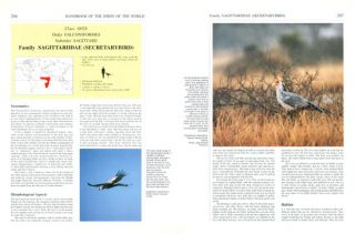Handbook of the birds of the world [HBW], volume two: new world vultures to Guineafowl.