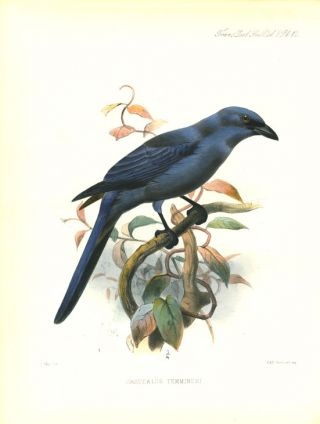A list of birds known to inhabit the Island of Celebes.