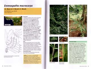 Field guide to the Rattan Palms of Africa.