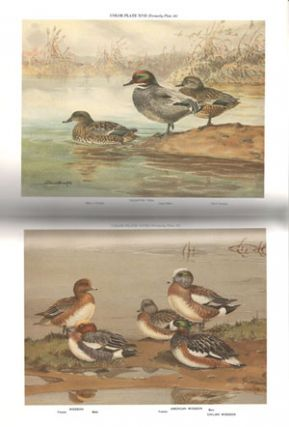 A natural history of the ducks.