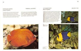 Butterfly and Angelfishes of the world. Volume one: Australia.