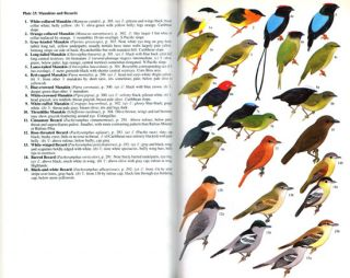 A guide to the birds of Costa Rica.