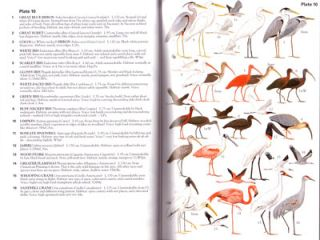 Birds of Mexico and Central America.