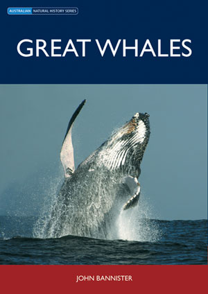 Great whales.
