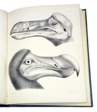 The dodo and kindred allies.