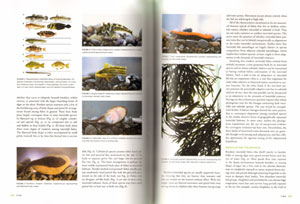 Encyclopedia of tidepools and rocky shores.