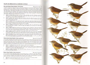 Reed and Bush warblers.