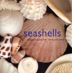 Seashells. Sandy Carlson.