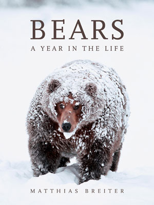 Bears: a year in the life. Matthias Breiter