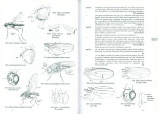The European families of the Diptera: identification, diagnosis, biology.