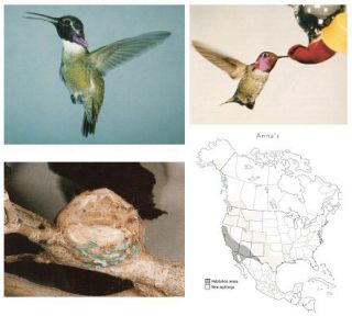 Hummingbirds of North America: attracting, feeding, and photographing.