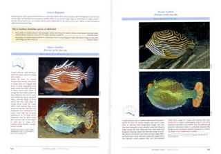 Fishes of Australia's southern coast.