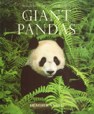 Giant pandas. Heather Angel