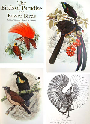 The birds of paradise and bower birds.