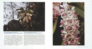 Wild Orchids in Myanmar: last paradise of wild orchids. Volume two: a poem of wild orchids.