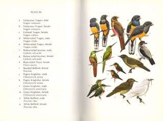 A guide to the birds of Trinidad and Tobago.