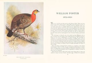Bird illustrators: some artists in early lithography.