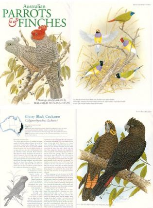 Australian parrots and finches.