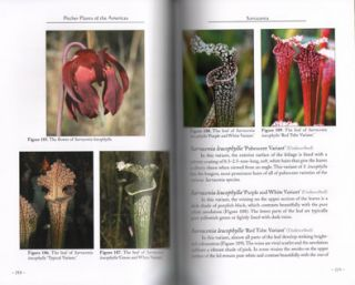 Pitcher plants of the Americas.