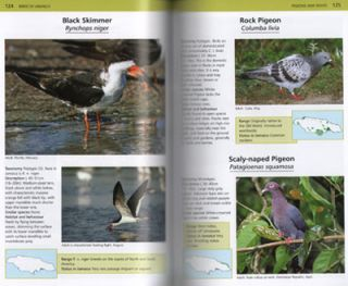 A photographic guide to the birds of Jamaica.