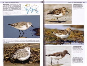 Shorebirds of the Northern Hemisphere.