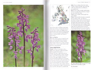 Orchids of Britain and Ireland: a field and site guide.