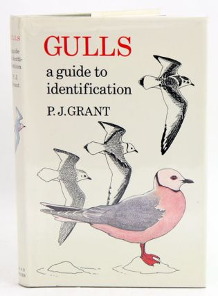 Gulls: a guide to identification