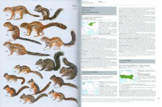 Handbook of the mammals of the world [HMW], volume six: Lagomorphs and Rodents I.