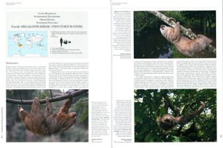 Handbook of the mammals of the world [HMW], volume eight: insectivores, sloths and colugos.