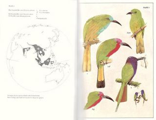 The bee-eaters.