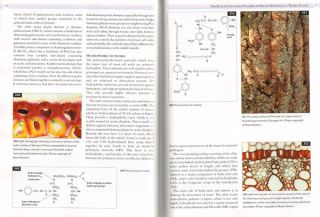 Trees and forests a colour guide: biology, pathology, propagation, silviculture, surgery, biomes, ecology, conservation.