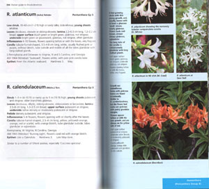 Pocket guide to Rhododendron species: based on the descriptions of H.H. Davidian.