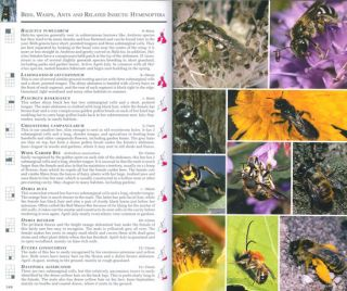 Collins complete guide to British insects: a photographic guide to every common species.