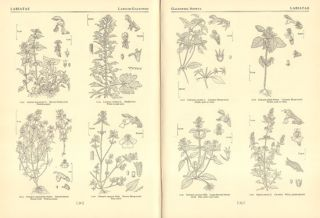 Flora of the British Isles, three parts [of four].