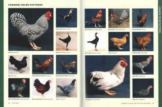 Storey's illustrated guide to poultry breeds.