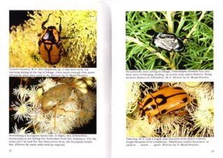 A pictorial field guide to the beetles of Australia: Part five, Cetiniidae.