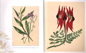 Women of flowers: botanical art in Australia from the 1830s to the 1960s.