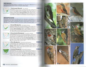 Complete photographic field guide: birds of southern Africa.