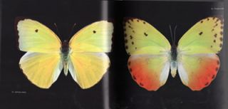 100 Butterflies and Moths: portraits from the tropical forests of Costa Rica.